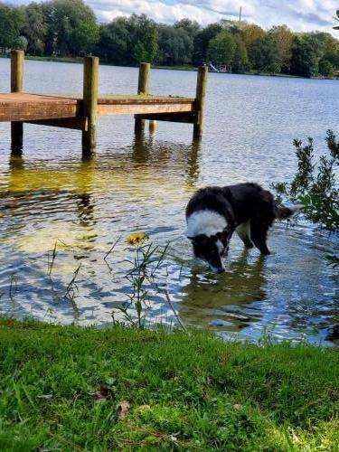 Dog enjoying the water